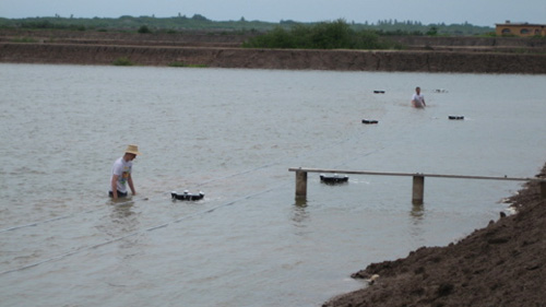 Engineers installing multiple 'h' units in a shrimp pond